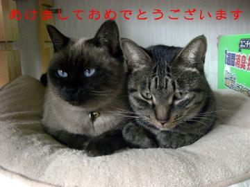ピケ&ラン