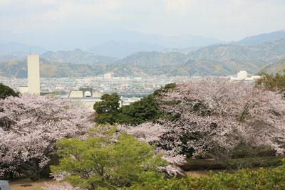 1104桜2