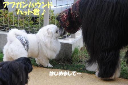 縺ソ縺ッ_convert_20110208162743