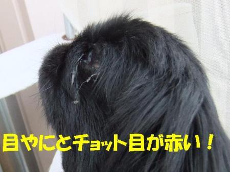 05_convert_20100513084332[1]