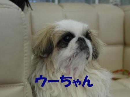 hanami05.jpg