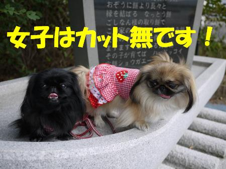 mikomo0502502.jpg