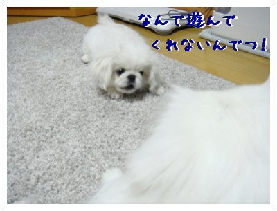 DSC01327.jpg