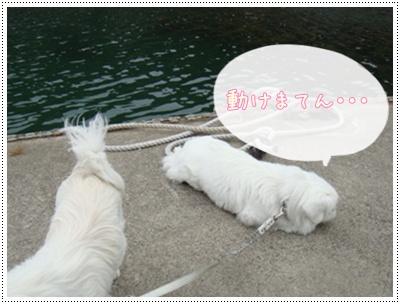 DSC04814.jpg