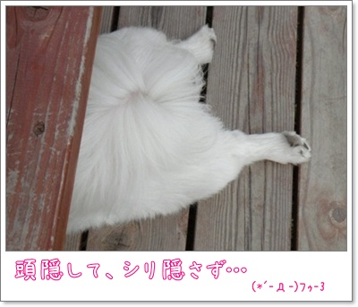 DSC06421_20090531223306.jpg