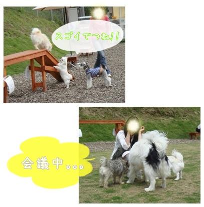 aibei_20090525234121.jpg