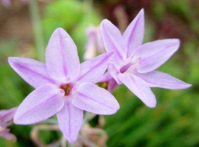 いつものランコース 紫色のお花