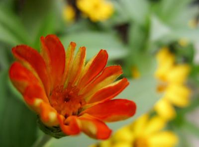 新丸子に咲くオレンジ色のお花