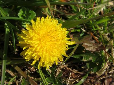 春の野原 黄色