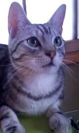 美猫でしょ(*^_^*)