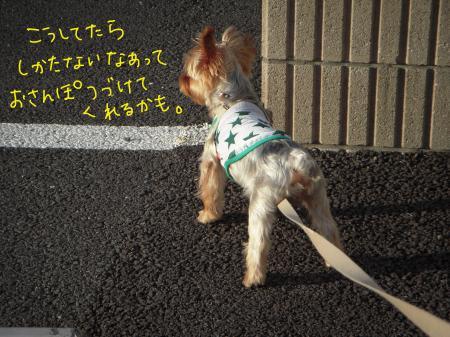 DSCN1124_convert_20110818214703.jpg