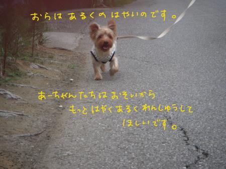 DSCN1133_convert_20110724181245.jpg