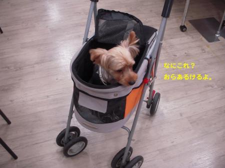 DSCN1151_convert_20110731095841.jpg