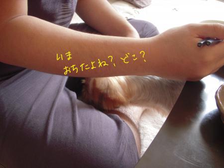 DSCN1210_convert_20110821195914.jpg