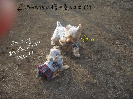 DSCN2120_convert_20120216120907.jpg