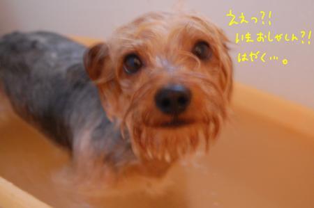 DSC_0010_convert_20120309235108.jpg