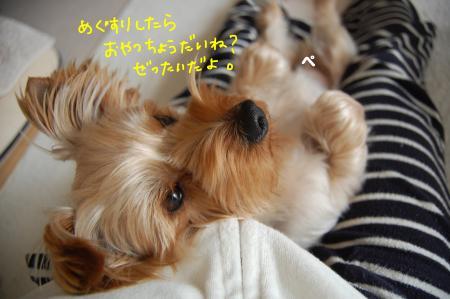 DSC_0080_convert_20120229120915.jpg