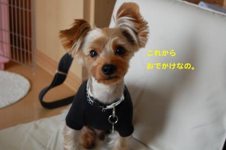 DSC_0443_convert_20110731095756.jpg