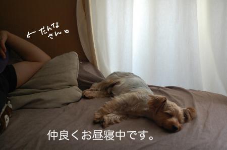 DSC_0445_convert_20110829115551.jpg