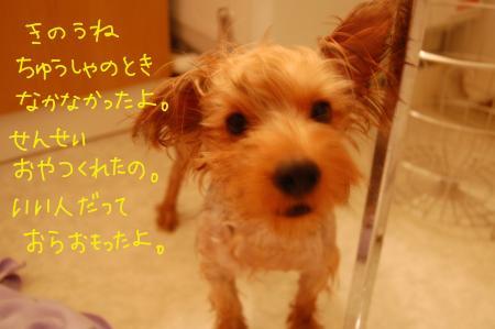 DSC_0446_convert_20110825220415.jpg