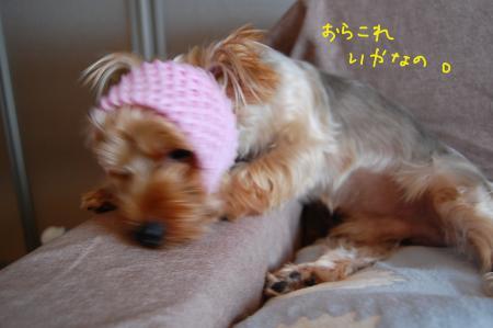 DSC_0447_convert_20110820155733.jpg