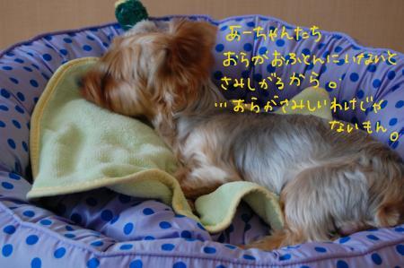 DSC_0448_convert_20110728040805.jpg