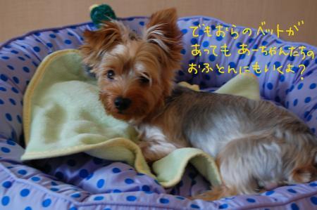 DSC_0450_convert_20110728040847.jpg