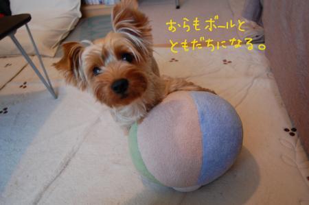 DSC_0455_convert_20110719171925.jpg
