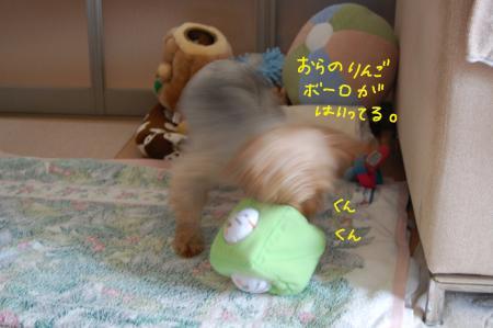 DSC_0457_convert_20110904213911.jpg