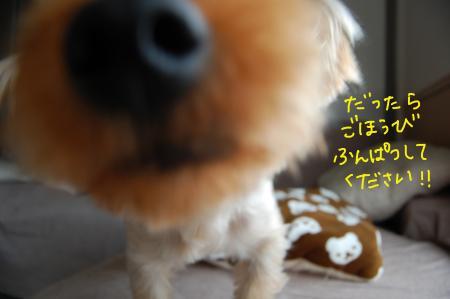 DSC_0459_convert_20110804132606.jpg