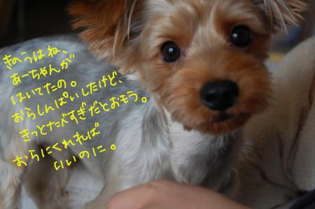 DSC_0486_convert_20110808120803.jpg