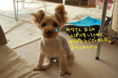 DSC_0503_convert_20110808120822.jpg