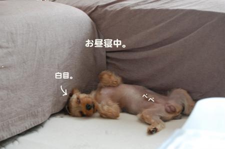 DSC_0507_convert_20110809130755.jpg