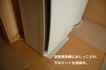 DSC_0521_convert_20110811113829.jpg