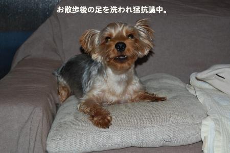 DSC_0544_convert_20110813231530.jpg