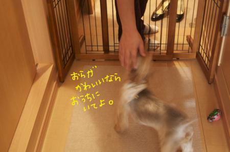 DSC_0603_convert_20110817134500.jpg