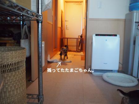 P3130286_convert_20120410091439.jpg