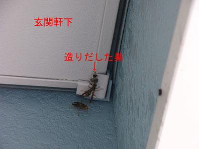 1.ハチ駆除事例36-3