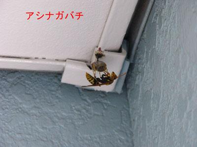 1.ハチ駆除事例36-4
