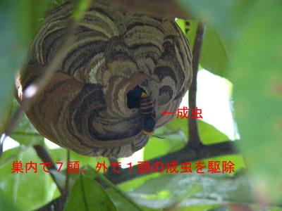 ハチ写真集45-2
