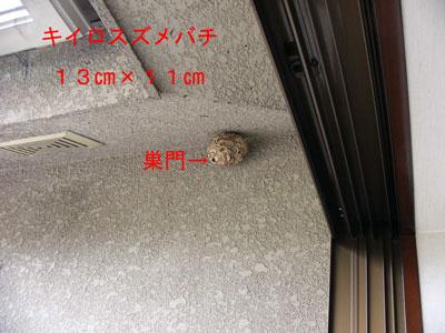 ハチ写真集46-1