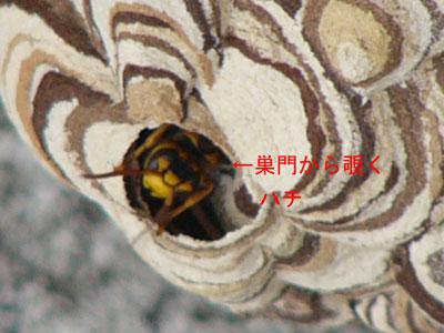 ハチ写真集46-2