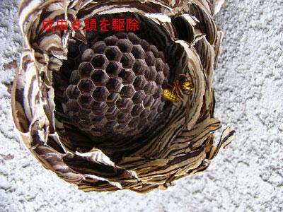 ハチ写真集46-3