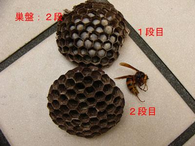 ハチ写真集46-4