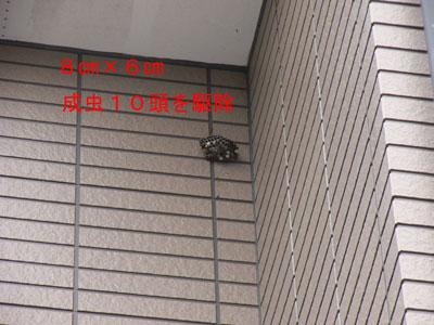 ハチ写真集47-2
