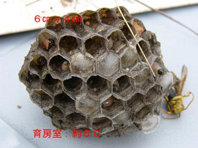 ハチ写真集52-3