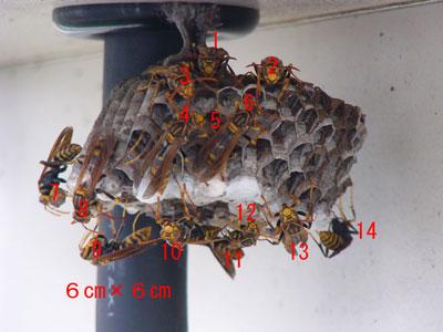 ハチ写真集53-2