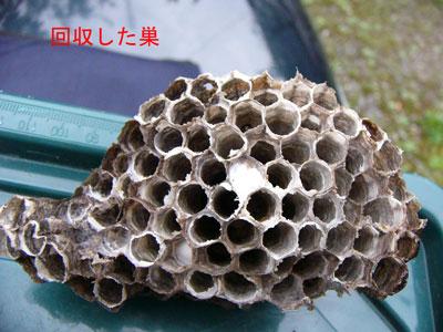 1.ハチ駆除事例38-3