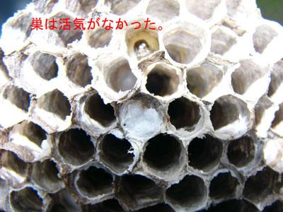 1.ハチ駆除事例38-4