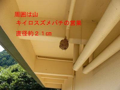 ハチ写真集55-1